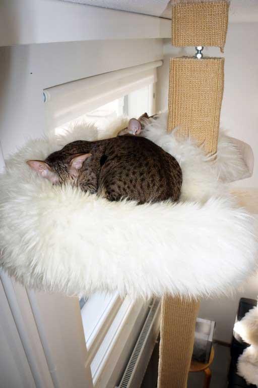 Kissat nukkumassa kiipeilypuussa